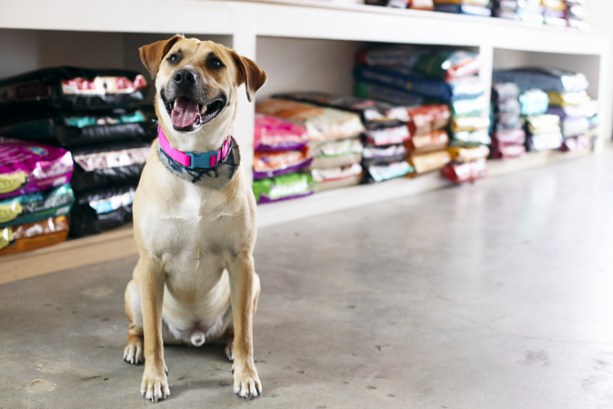 Tips to Choose the Right Pet Food Stores